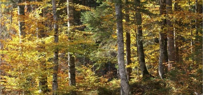 faggeta in autunno2
