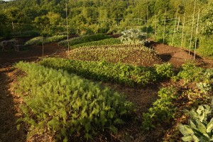Jardin-Mandala_crédit-Frédéric Sauvadet