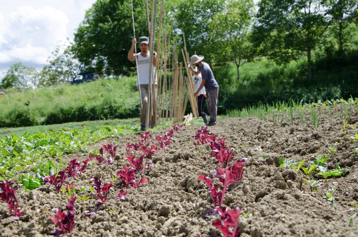 Rampicanti Che Crescono All Ombra come avviare un orto in permacultura - la fattoria dell