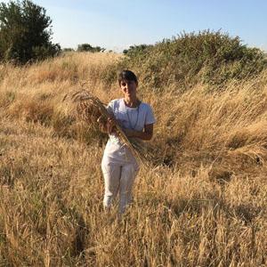 La via delle erbe e del pane. Percorso di riconoscimento e ...