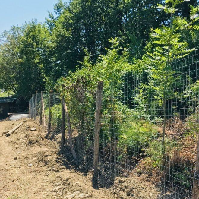 pollaio-recinzione