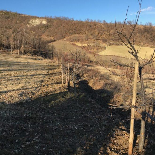 trapianto-alberi-768x1024